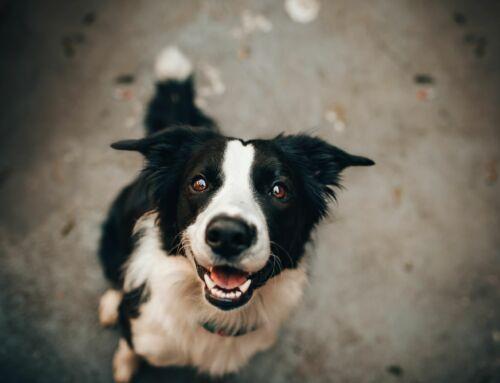 Wereld Hondendag!
