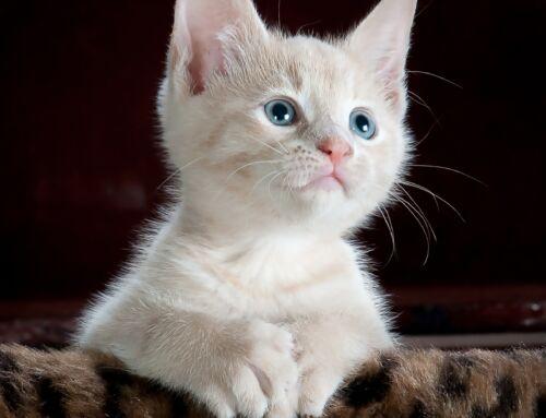 Kattenziekte gesignaleerd!