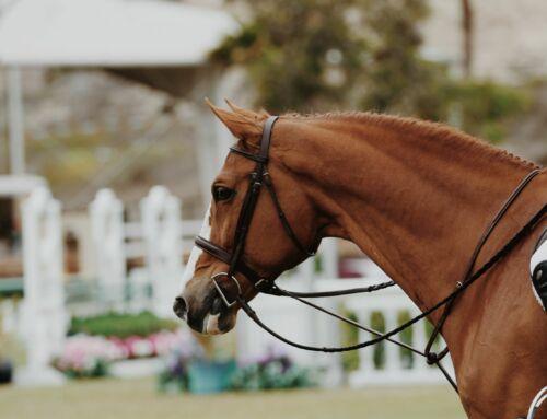 Locatie paarden en pony's registreren.
