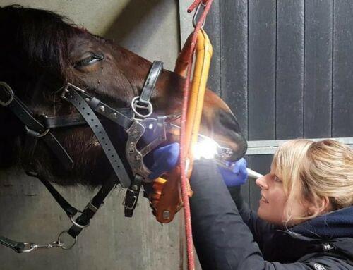 Versterking van ons paardenteam